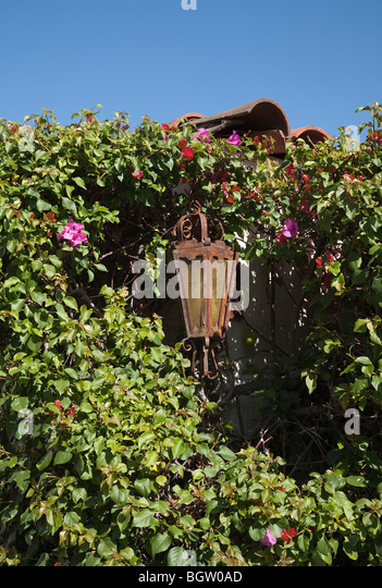 A vintage rusted lantern surrounded by a large bougainvillea plant in Palm Springs, California. - Stock Image