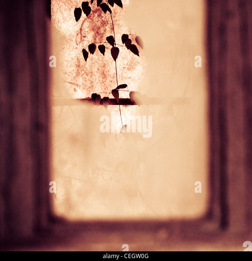 Broken window and a growing plant - Stock Image