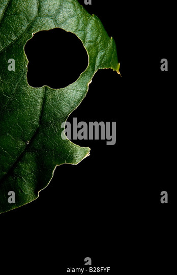 Fish-shaped leaf - Stock-Bilder