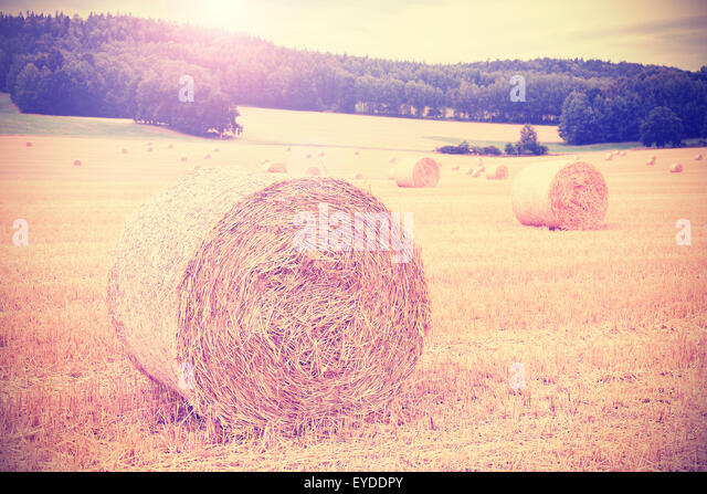 Vintage instagram toned harvested field with hay bales. - Stock Image