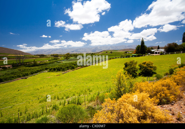 winelands landscape in Cape Town, South Africa - Stock Image