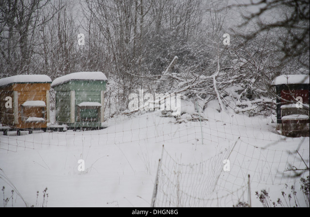 Bee hive in snow storm - Stock Image