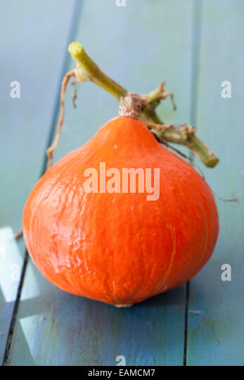 Red Kuri Squash - Stock Image