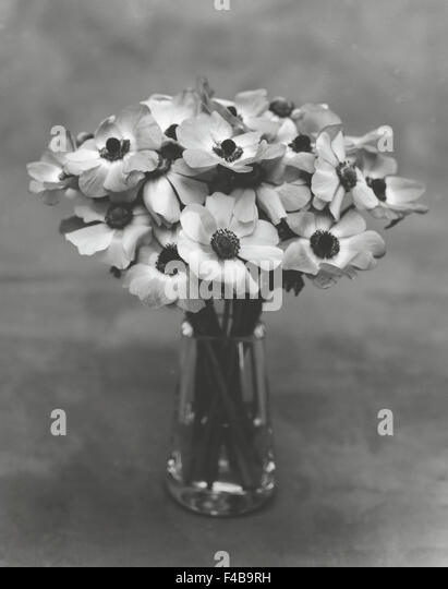 black and white bouquet catalogue 2 close-up flower grey colored background plants Swedish catalogue 3 vase vertical - Stock-Bilder