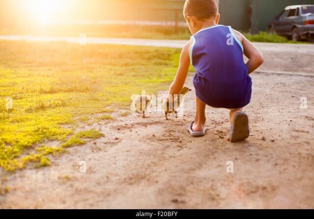 Young boy, stroking ducklings, rear view - Stock-Bilder