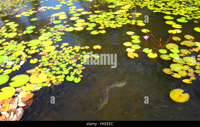 Paofai stock photos paofai stock images alamy for Ornamental pond