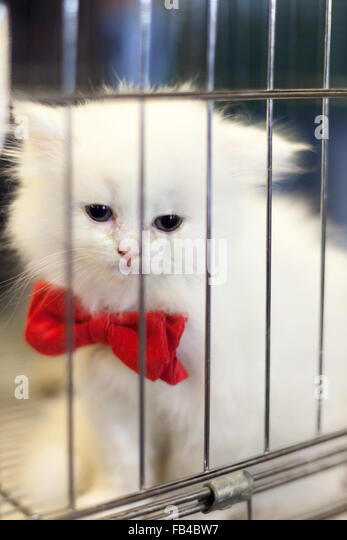 Persian Cat Rescue Northern Ca