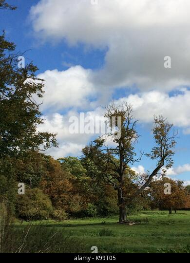 Melton Mowbrey 22nd  September 2017: Blue sky, white cloud's a  warm day with golden autumn colours.Clifford - Stock Image