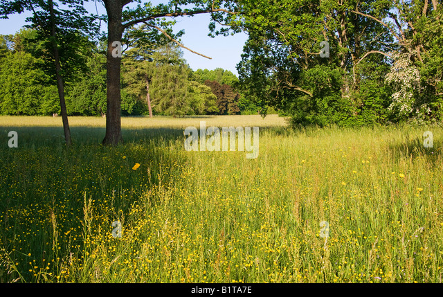 Open glade with flowering wild plants in the Park Palacowy, Bialowieza, Poland - Stock Image