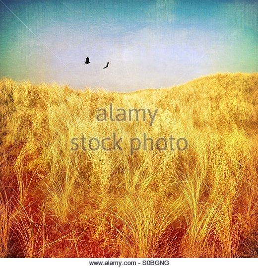 Grassland landscape - Stock Image
