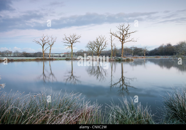 Frosty winter scenes beside a still lake, Morchard Road, Devon, England. Winter (November) 2010. - Stock Image
