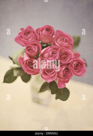 Pink roses in vase - Stock Image