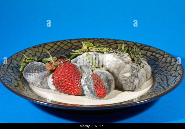 Bowl of Rotting Mouldy Strawberries on a blue background - Stock Image