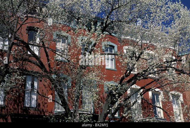 Spring flowering trees Georgetown Washington D.C. USA - Stock Image