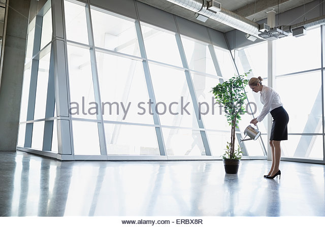 Businesswoman watering potted tree in modern office - Stock-Bilder