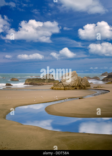 Harris Creek and ocean with seagulls. Harris Beach State Park, Oregon - Stock Image