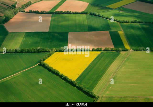 Aerial view, grain fields and canola fields separated by hedgerows, Erbes-Buedesheim, Rhineland-Palatinate, Germany, - Stock-Bilder