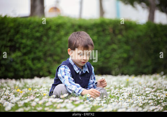 Boy (4-5) picking up daisies - Stock Image