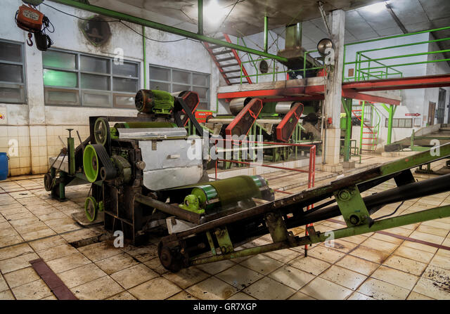 Factory with conveyor blet for processing green tea, Java, Indonesia - Stock Image