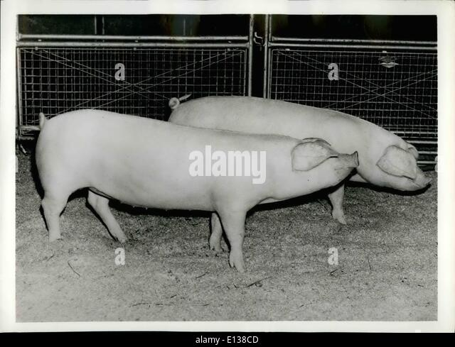 Feb. 29, 2012 - WINNERS BY A LENGTH. Described as having , fine length for their age and exceptionally good hams - Stock Image
