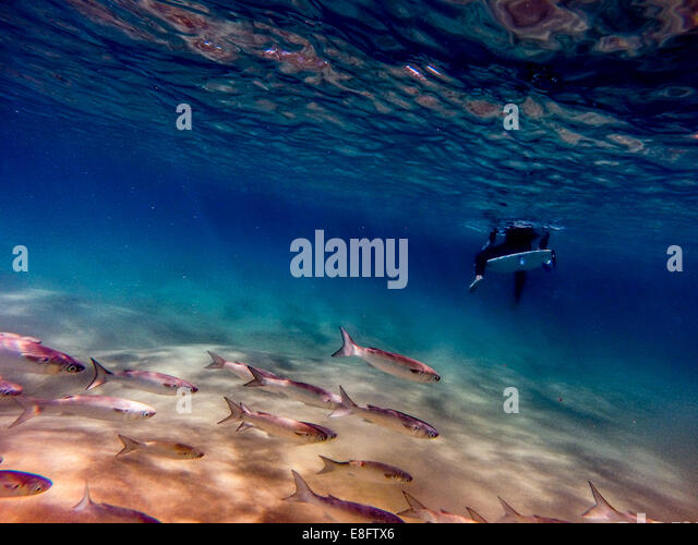 Shoal of fish swimming past surfer's legs - Stock-Bilder