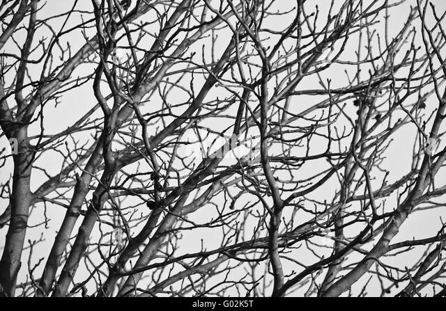 Black Branched Tree Stock Photos Amp Black Branched Tree
