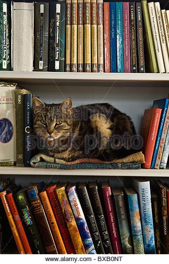 Cat lying on bookshelf - Stock Image