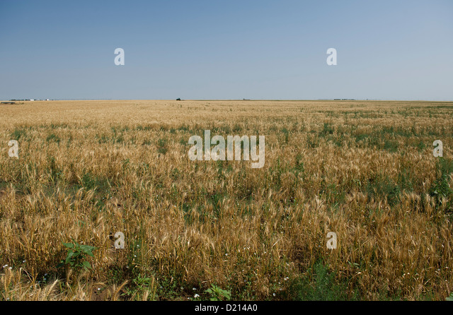 Dockage stock photos dockage stock images alamy - Gloriette fer smeden ...