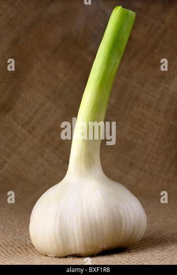 Fresh Garlic - Stock Image