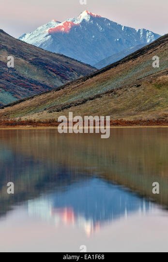 Alpenglow lights up the peak of the mountain reflected in a remote alpine tundra lake in the Alaska Range Mountains - Stock Image