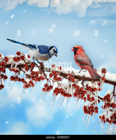 Digital Painting Of Birds  In Winter - Stock Image