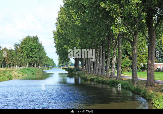 The Netherlands, Noordholland, Edam cheeses, channel, tree series, - Stock Image