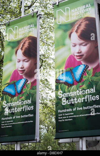 Signs or Banners for the Sensational Butterflies Exhibition, Natural History Museum, London. - Stock Image