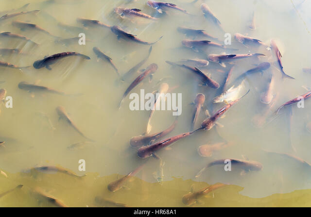 Fish scales texture stock photos fish scales texture for Fish without scales