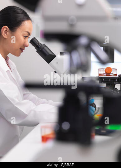 Female scientist examining cell cultures growing in a culture jar by using a inverted microscope in the laboratory - Stock-Bilder