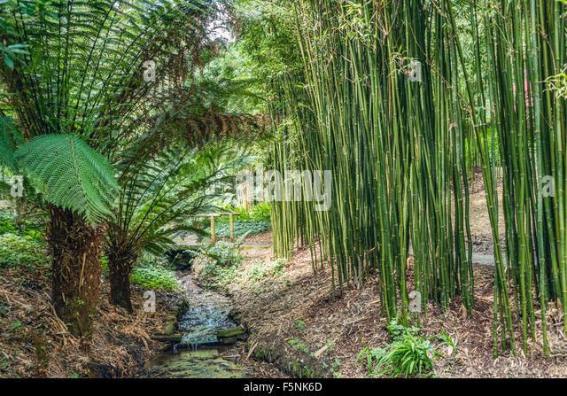 Bambus stock photos bambus stock images alamy for Bamboo garden