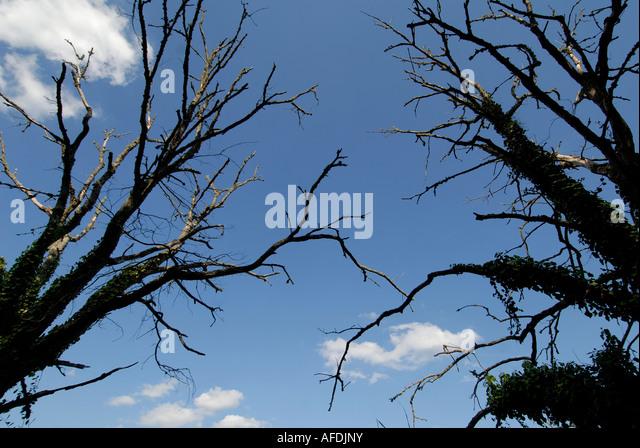Dead trees in La Brenne Parc Naturelle, Indre, France. - Stock Image