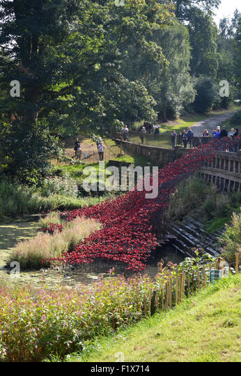 'The Wave' Red Poppies at Yorkshire Sculpture Park - Stock Image