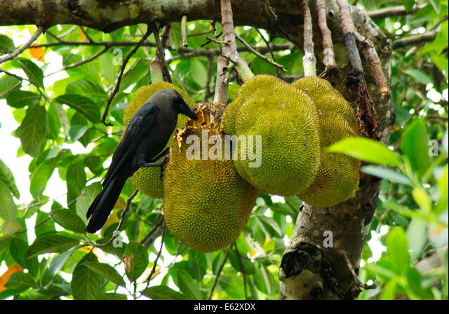 how to keep birds from eating fruit trees