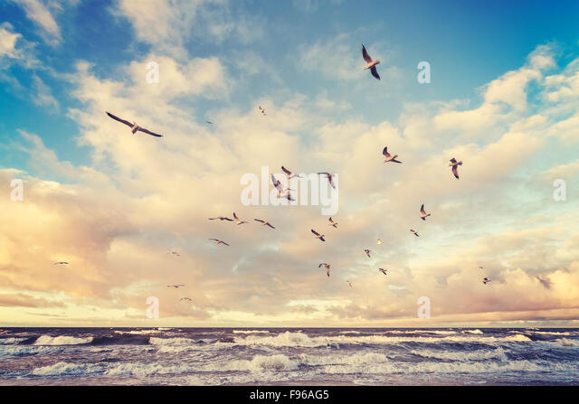 Vintage stylized flying birds above a beach at sunset. - Stock Image