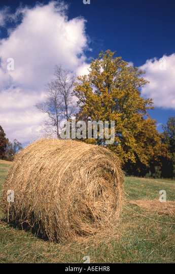 Fall Colors tree field pasture - Stock Image
