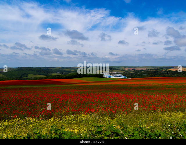 Sea of poppies, Falmer:  towards the Amex stadium, Brighton and Hove Albion's home, South Downs National Park, - Stock Image