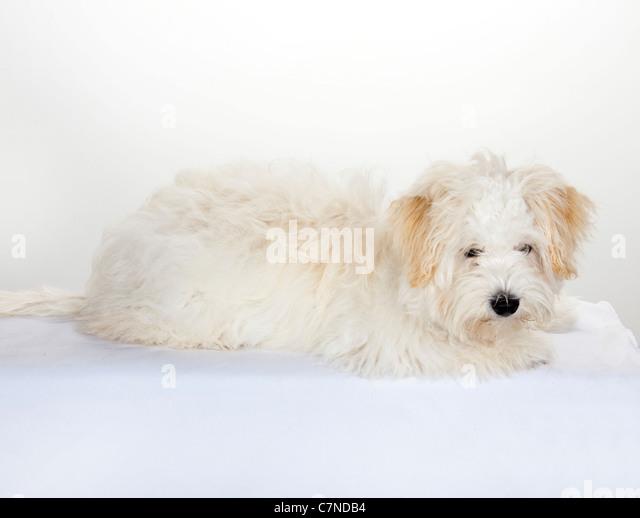 Sonja Morgan Dog Breed