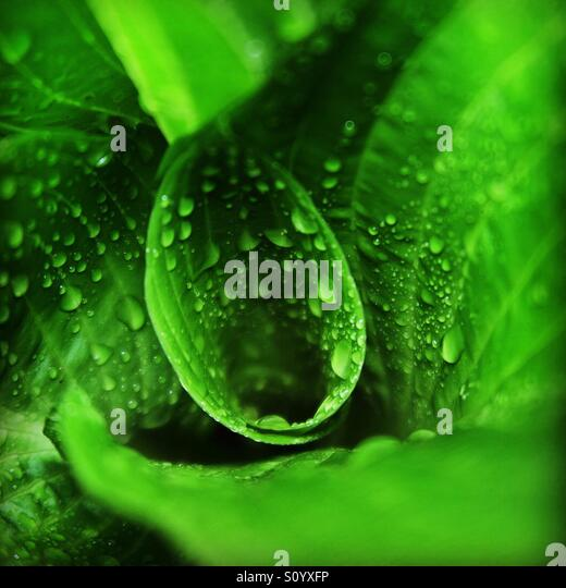 Green plant with raindrops - Stock Image