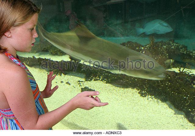 Alabama Dauphin Island The Estuarium public aquarium estuary exhibit girl fish - Stock Image