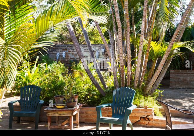 Baja Palms Stock Photos Baja Palms Stock Images Alamy
