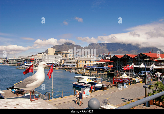 south africa cape town Victoria Albert waterfront pier gull - Stock Image