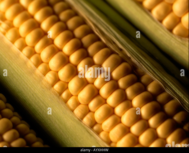 maize hispanic singles Maize (ipa: /meɪz/) (zea mays l ssp mays), known as corn in some english-speaking countries, is a cereal grain domesticated in mesoamerica and subsequently spread throughout the american continents.