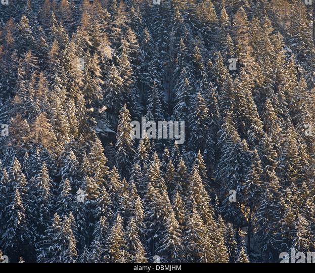 wood, winter, Austria, Tyrol - Stock Image