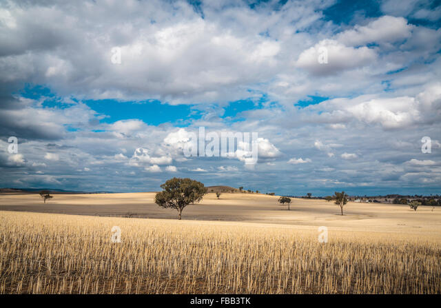 Sunlit field outback New South Wales, Australia - Stock Image